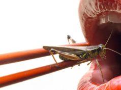 comer insectos en barcelona