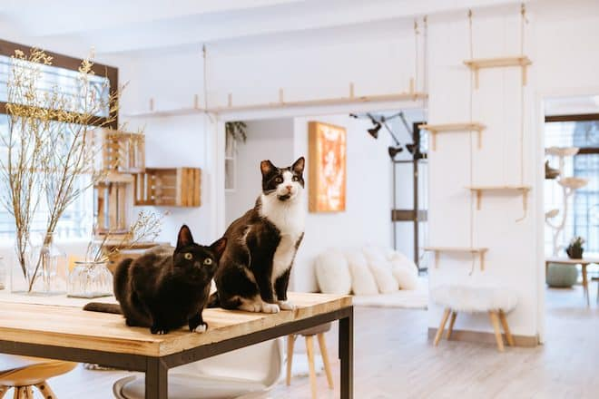 Suara Store y Suara Foundation si amas los gatos no te lo puedes perder - lugares