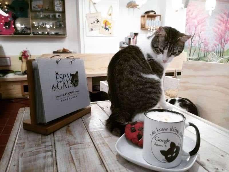Espai de gats: El primer cat-café de Barcelona - lugares