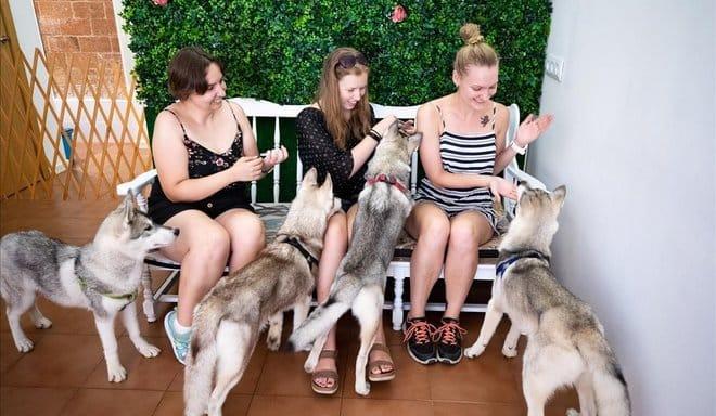 Husky House: un café para los amantes de los perros - novedades, lugares