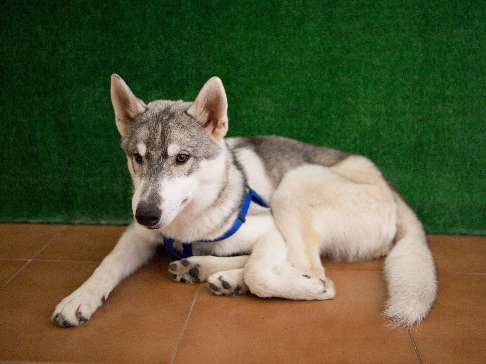 ¿Te gustan los perros? Visita la primera Dog House de Barcelona - novedades, lugares