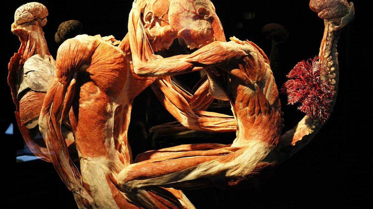 Conoce el cuerpo humano con Human Bodies - novedades, lugares