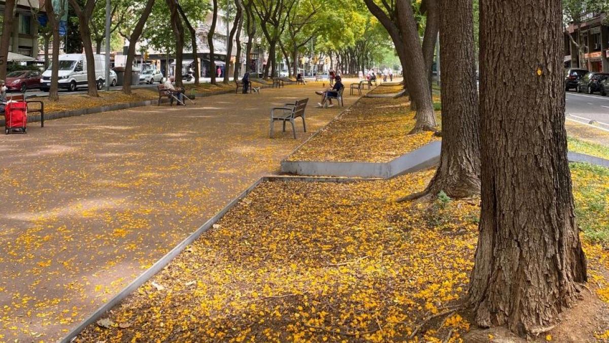 ¿Sabes cuál es el paseo de las Acacias de Barcelona? - lugares, destacado
